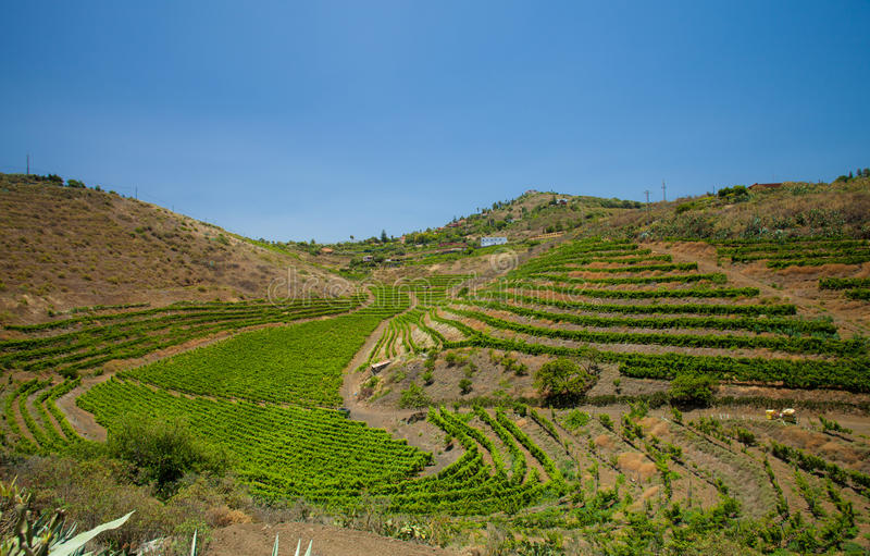 Wijngaarden rond Bandama stock foto