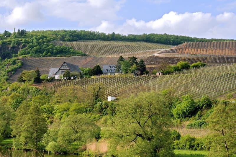 Wijngaarden rond het huis van een Duitse Vintager stock afbeelding