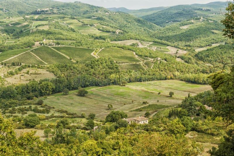Wijngaarden 's morgens in Albola in de regio Chianti stock afbeeldingen