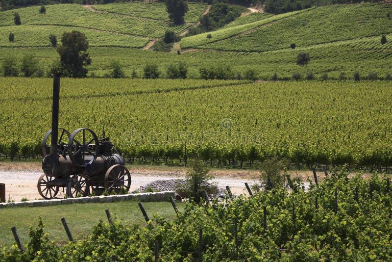 Wijngaarden - Vallei Colchagua - Chili stock afbeeldingen