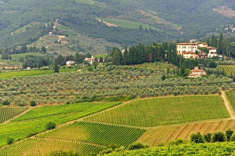 Wijngaarden van Chianti (Toscanië) royalty-vrije stock foto's