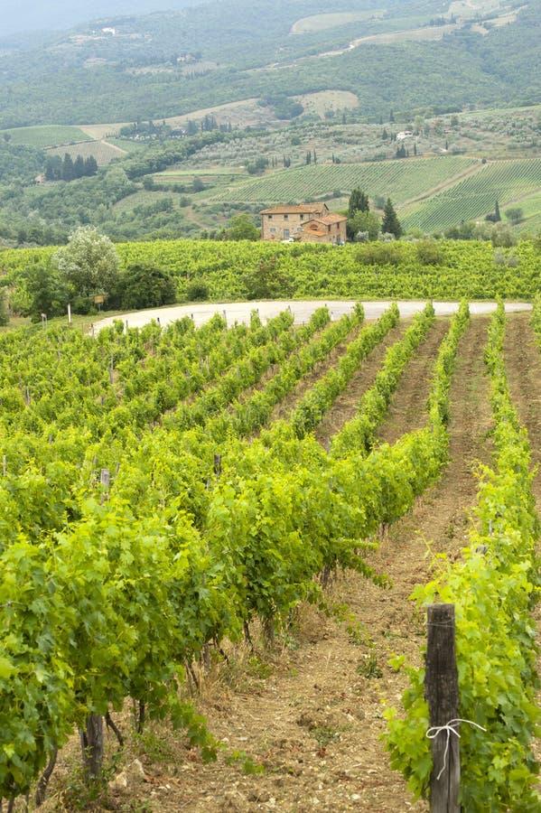 Wijngaarden van Chianti (Toscanië) royalty-vrije stock afbeeldingen