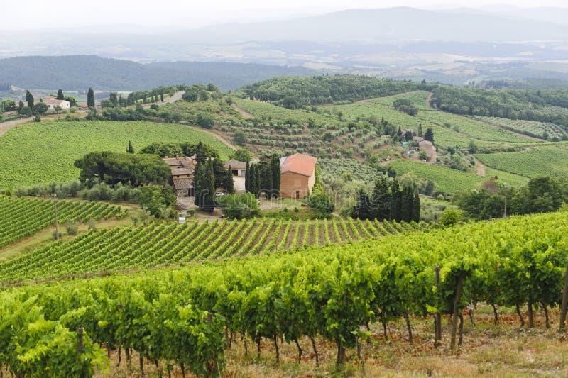 Wijngaarden van Chianti (Toscanië) stock foto