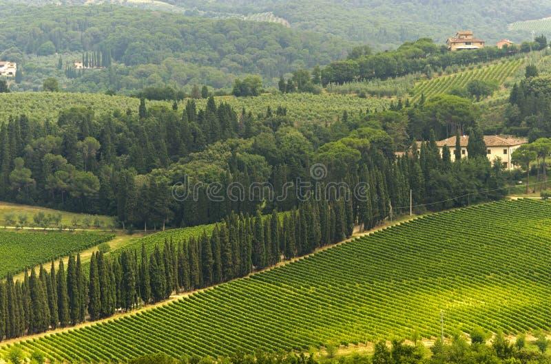 Wijngaarden van Chianti (Toscanië) stock foto's