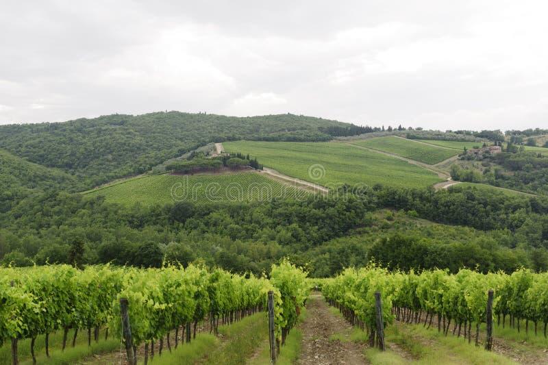 Wijngaarden van Chianti (Toscanië) stock fotografie