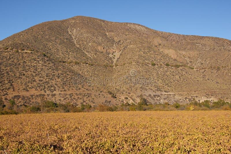 Wijngaarden van Chili royalty-vrije stock fotografie