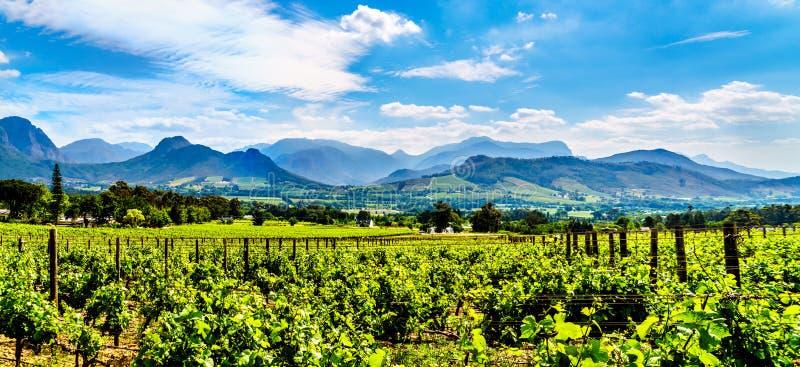 Wijngaarden van de Kaap Winelands in de Franschhoek-Vallei in de Westelijke Kaap van Zuid-Afrika stock foto's