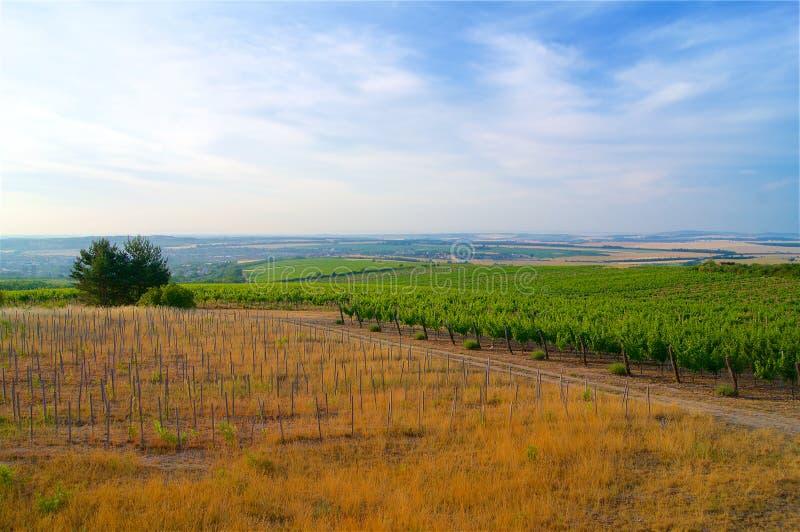 Wijngaarden in van de Zuid- Tsjechische Republiek Moravië stock fotografie