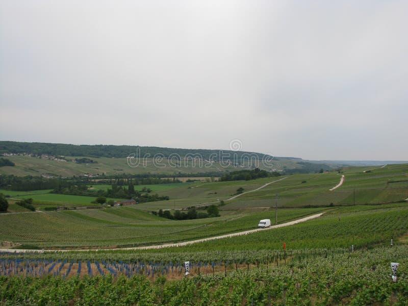 Wijngaarden van Eperna stock afbeeldingen