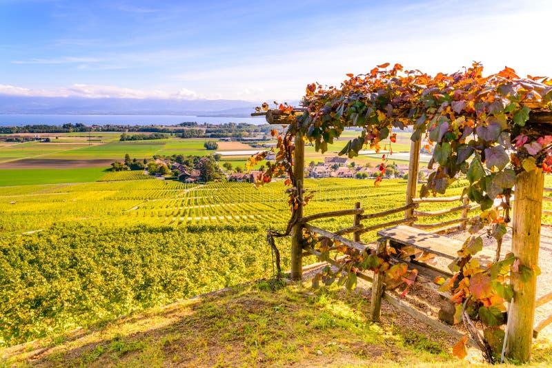 Wijngaarden van het Lavaux-gebied over meer Leman & x28; meer van Geneva& x29; stock afbeeldingen