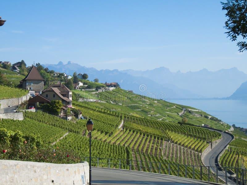 Wijngaarden van Lavaux (1) royalty-vrije stock foto's