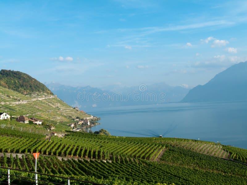 Wijngaarden van Lavaux (3) stock foto's