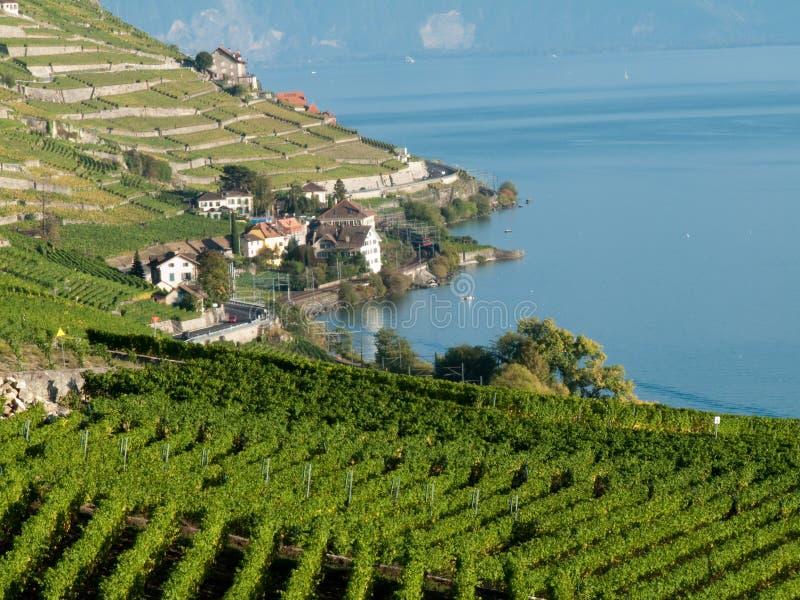 Wijngaarden van Lavaux (5) stock foto