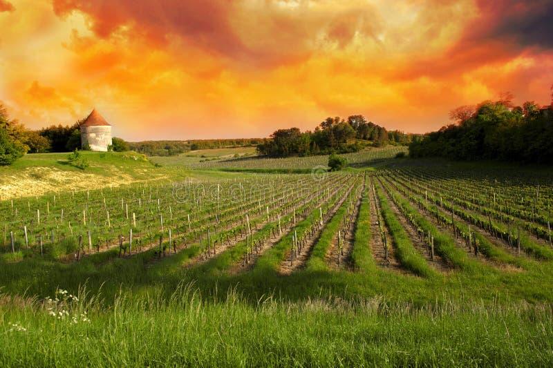 Wijngaarden van Saint Emilion, de Wijngaarden van Bordeaux royalty-vrije stock afbeelding