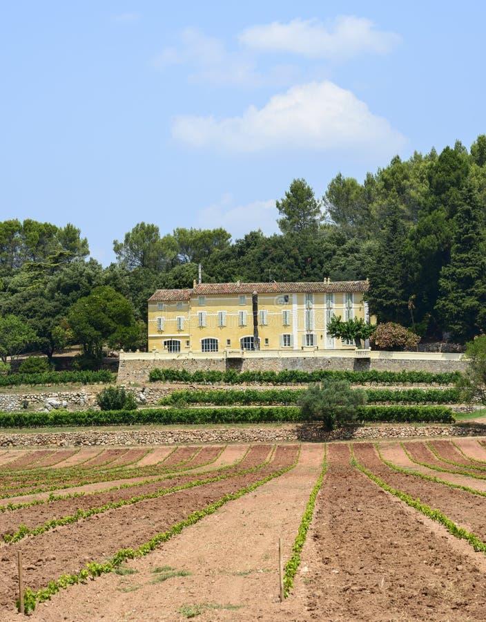 Wijngaarden in Var (de Provence) stock foto's