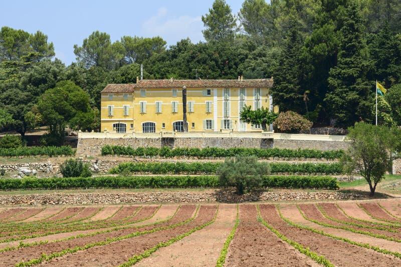 Wijngaarden in Var (de Provence) royalty-vrije stock foto's