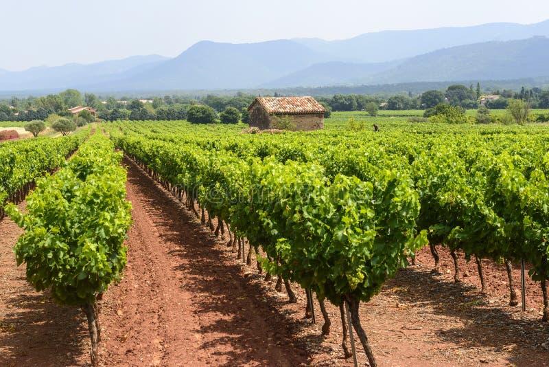 Wijngaarden in Var (de Provence) stock foto