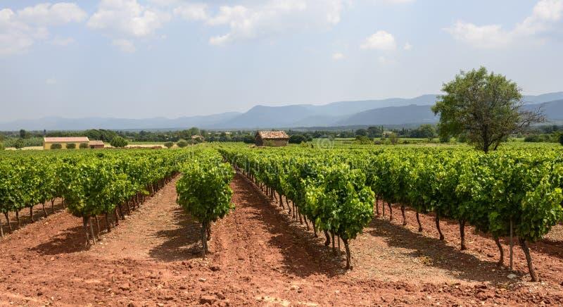 Wijngaarden in Var (de Provence) royalty-vrije stock fotografie