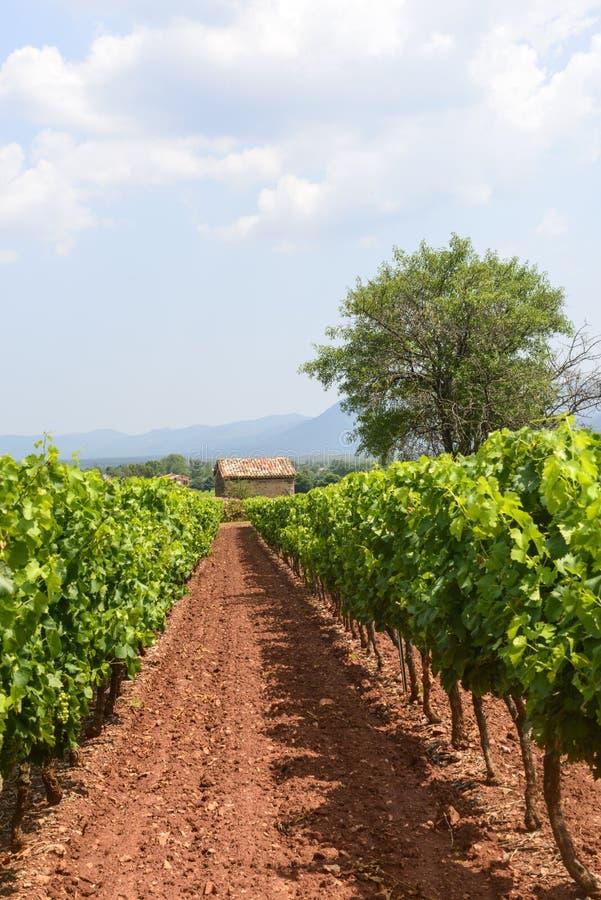 Wijngaarden in Var (de Provence) royalty-vrije stock afbeeldingen