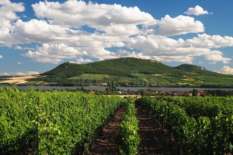 Wijngaarden, Zuid-Moravië, Tsjechische republiek royalty-vrije stock foto's