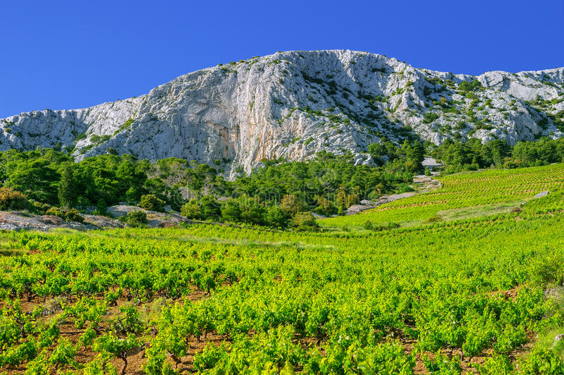 Wijngaarden, zuidelijke kust van eiland Hvar royalty-vrije stock foto