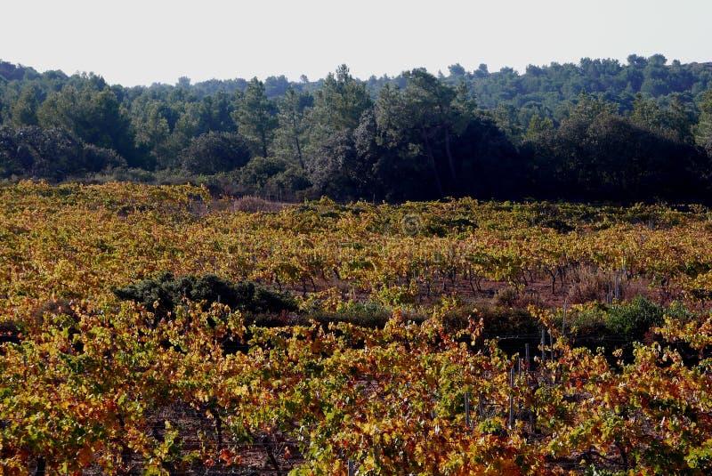 Wijngaardenlandschap royalty-vrije stock foto's