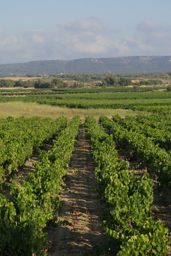 Wijngaardenlandschap in het zuiden van Frankrijk royalty-vrije stock foto's