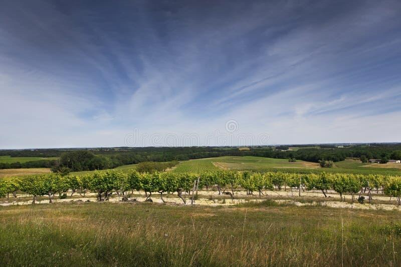 Wijngaardenpanorama in Zuiden van Frankrijk stock foto's