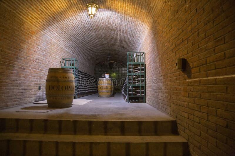 wijngaardenqueretaro cava Mexico royalty-vrije stock fotografie