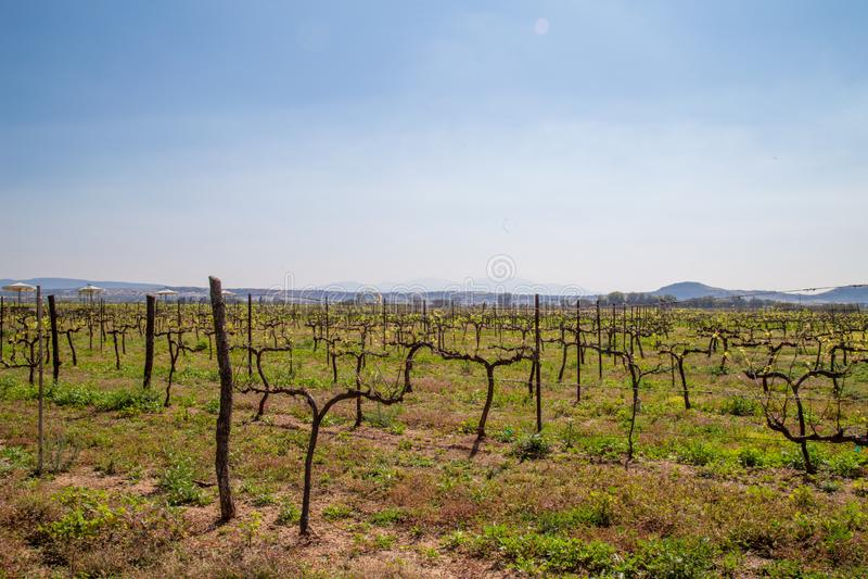 wijngaardenqueretaro Mexico stock foto