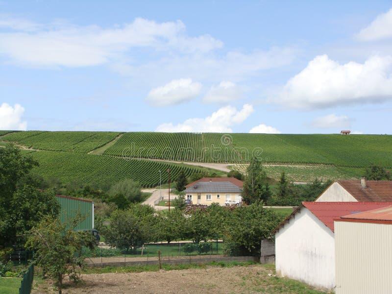 Wijngaardheuvel stock foto's