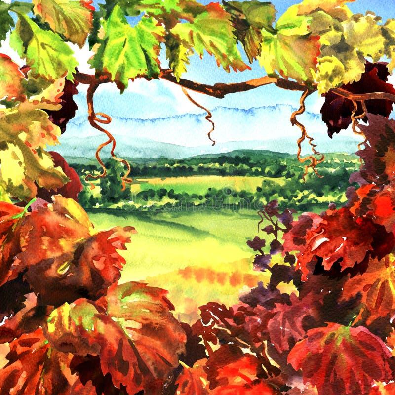 Wijngaardkader met mooi dorps landelijk landschap, gebied, weiden, zonnige dag, hand getrokken waterverfillustratie stock illustratie