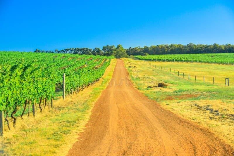 Wijngebied Australië stock foto's