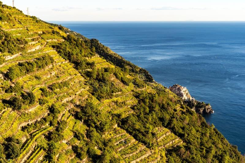 Wijngebieden dichtbij de Middellandse Zee bij Cinque Terre-dorp in Italië royalty-vrije stock afbeeldingen