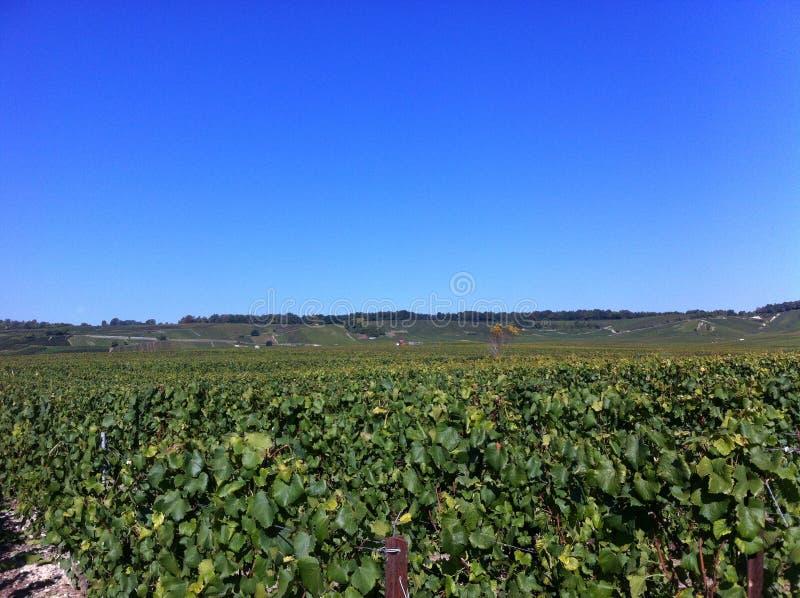 Wijnlandgoed in champagne & x28; france& x29; stock fotografie