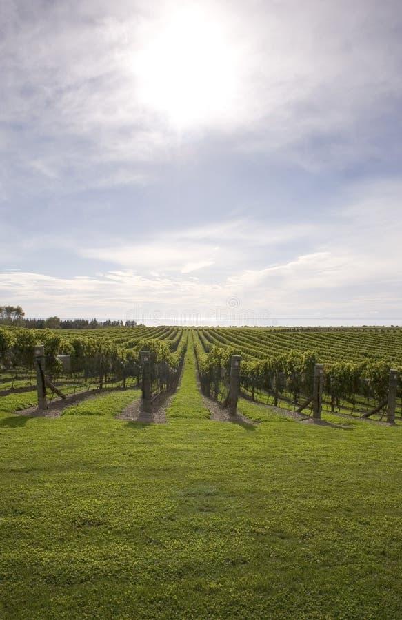 Wijnmakerij royalty-vrije stock afbeelding