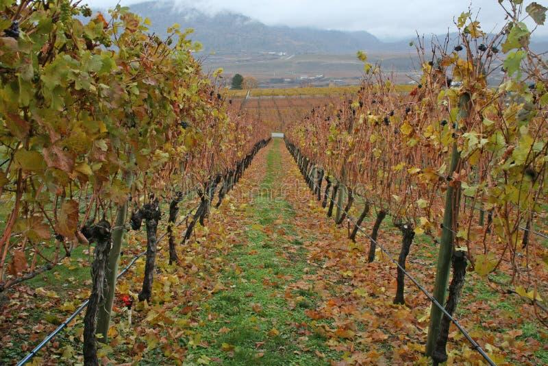 Wijnmakerij in de herfst stock afbeelding