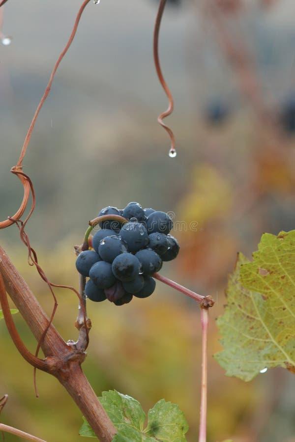 Wijnmakerij in de herfst stock afbeeldingen