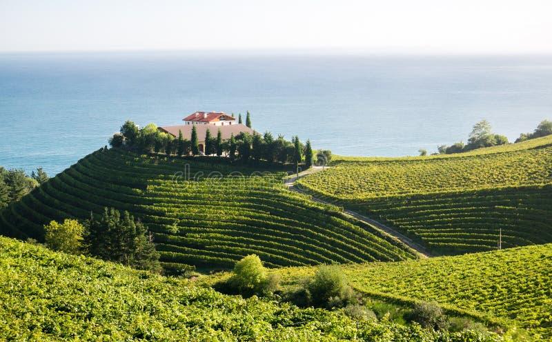 Wijnmakerij in Eitzaga, Baskisch Land, Spanje stock foto's