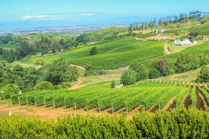 Wijnmakerij luchtmening royalty-vrije stock afbeeldingen