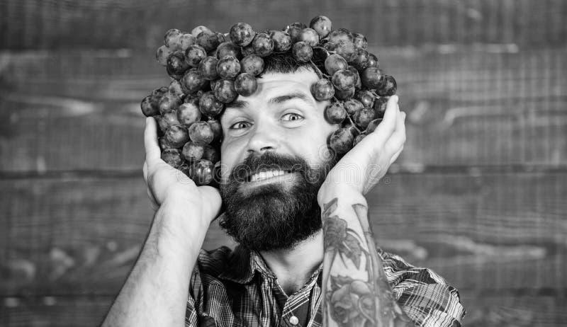 Wijnmakerij vrolijke arbeider Landbouwer met druiven Wijnmakerijconcept Mens met de bos van de baardgreep van druiven op hoofd ho royalty-vrije stock afbeelding