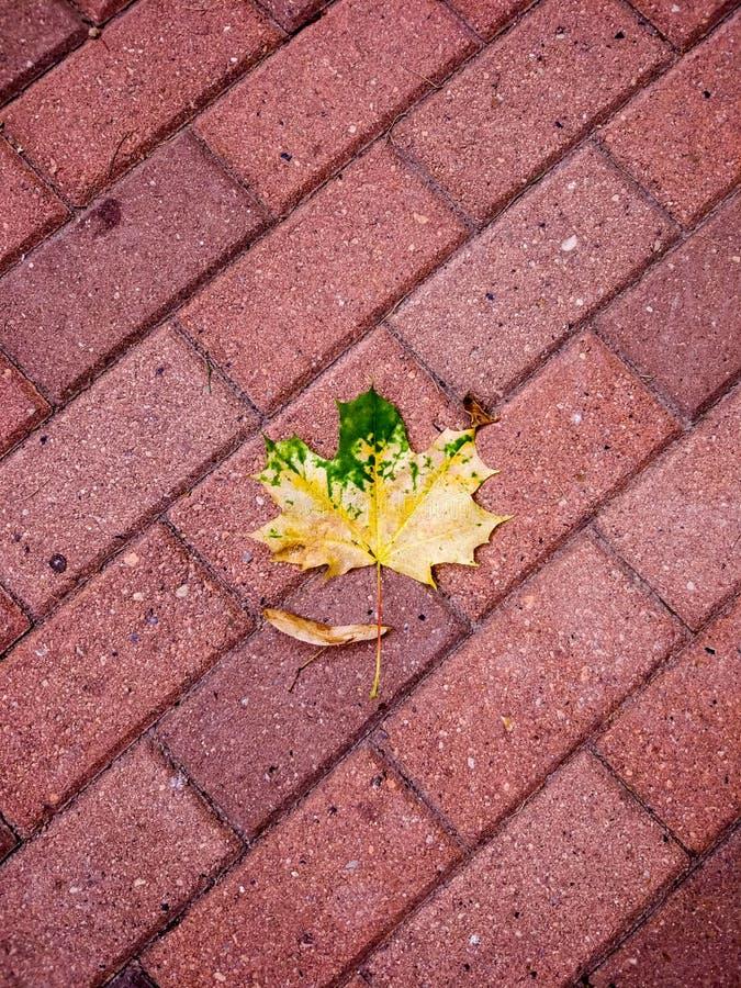 Wijnoogst & de herfst stock fotografie