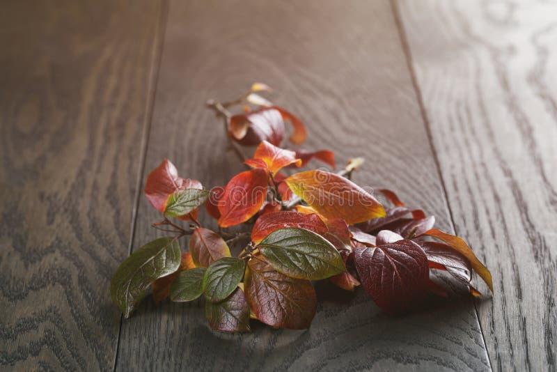 Wijnoogst gestemde foto van de herfstbladeren royalty-vrije stock fotografie