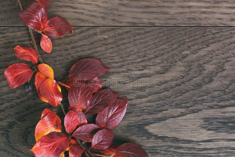 Wijnoogst gestemde foto van de herfstbladeren over hout royalty-vrije stock fotografie
