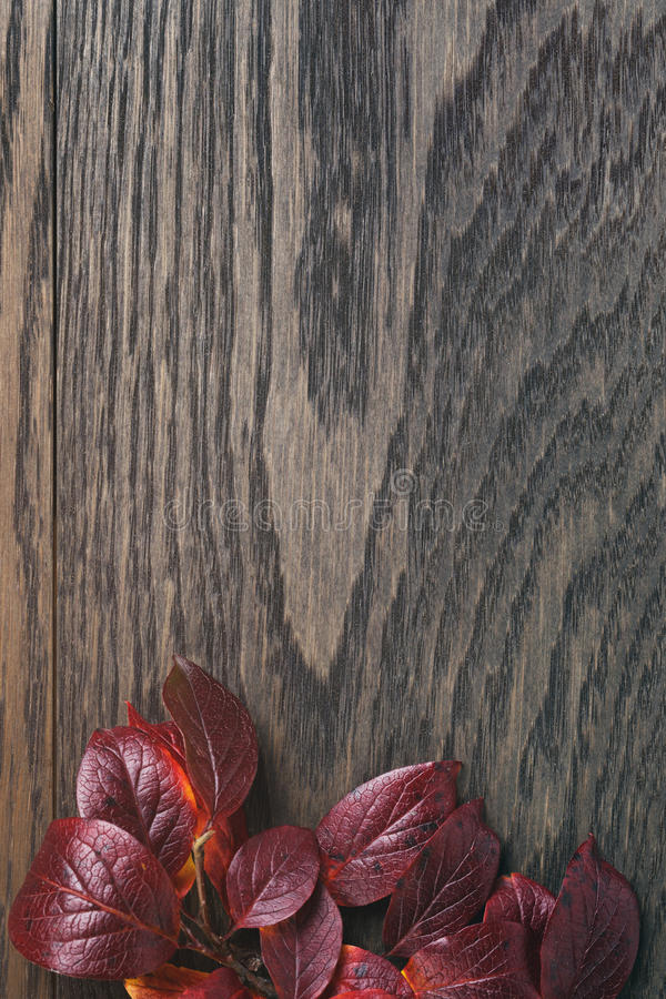 Wijnoogst gestemde foto van de herfstbladeren over hout stock foto