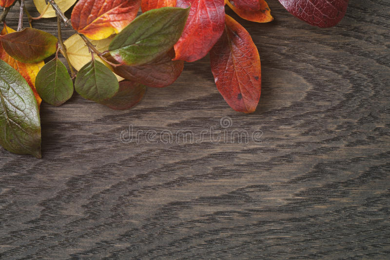 Wijnoogst gestemde foto van de herfstbladeren over hout stock fotografie