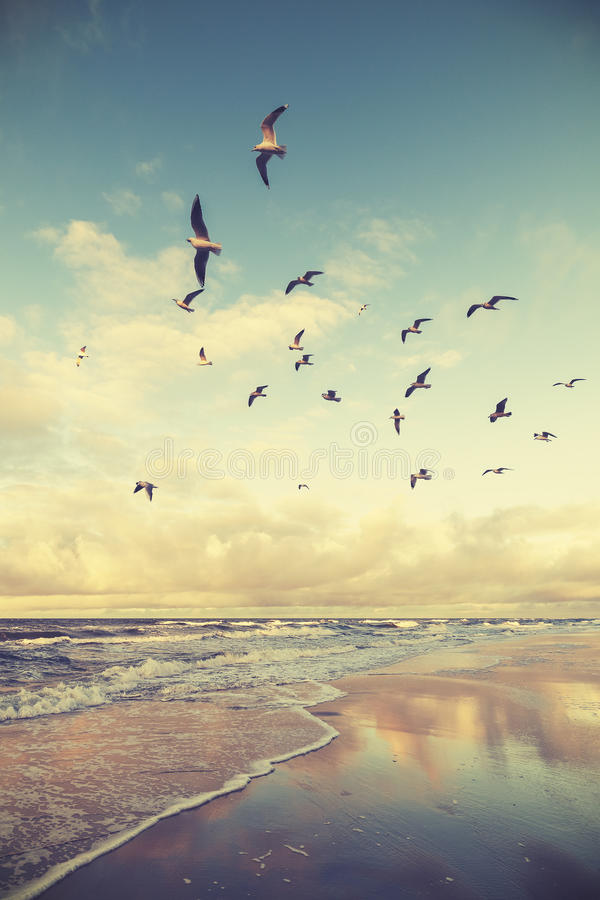 Wijnoogst gestileerde vliegende vogels boven een strand bij zonsondergang royalty-vrije stock foto's