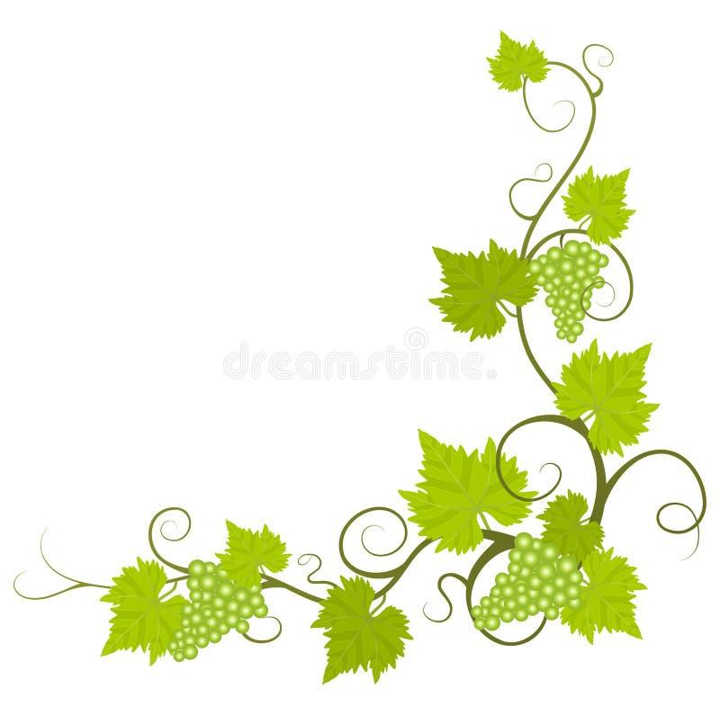 Wijnstok. vector illustratie