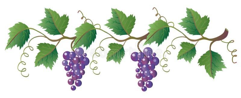 Wijnstok stock illustratie