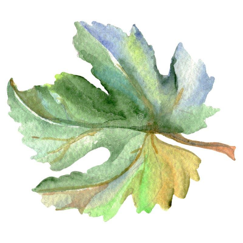 Wijnstok Groen blad Waterverf achtergrondillustratiereeks E stock illustratie
